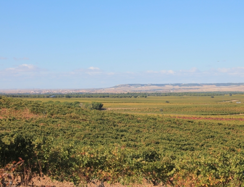 Proyecto de patrimonio vitivinícola de La Seca, elegido para ser votado en los Presupuestos Participativos de la Dip.Valladolid